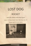 let's help find rocket